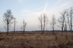 Осень Обезьяна  LandsÑ Деревья Стоковое Изображение RF
