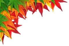 осень обрамила листья Стоковые Изображения RF