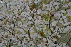 Осень октябрь Листва в кроне взгляда леса нижнего стоковые изображения rf