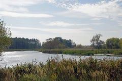 Осень октябрь Тростники на береге пруда Ветреный солнечный день Ландшафт стоковое фото rf
