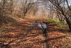 Осень октябрь Широкая дорога леса осени Стоковая Фотография