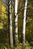 осень освещает treess солнца Стоковая Фотография