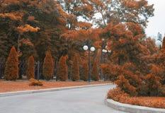 Осень парка переулка последняя Ландшафт осени выходит красный цвет Стоковые Фотографии RF