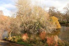 Осень, парк падения Деревянный путь, красочные листья на деревьях Стоковое Изображение
