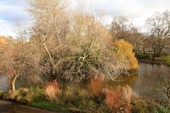Осень, парк падения Деревянный путь, красочные листья на деревьях Стоковая Фотография