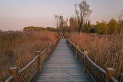 Осень, парк падения путь yosemite национального парка Стоковое Фото