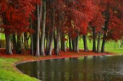 Осень - парк Tineretului города Стоковые Изображения