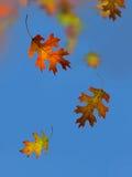 Осень. Падение лист. Стоковое фото RF