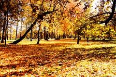 Осень падение осенний парк валы листьев осени Стоковые Фото