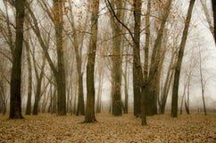 Осень, падение Стоковое фото RF