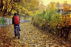 Осень падения Стоковые Фото