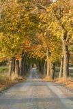 осень переулка Стоковые Фотографии RF