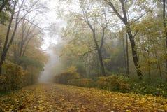 осень переулка Стоковые Изображения RF