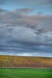 осень под желтым цветом виноградника пасмурного неба Стоковая Фотография