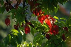 осень покрасила листья Стоковая Фотография RF