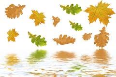 осень покрасила листья multi Стоковое Изображение RF
