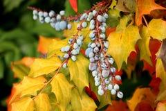 осень покрасила листья Стоковые Изображения RF