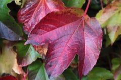 осень покрасила листья стоковые изображения