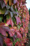 осень покрасила листья стоковое изображение