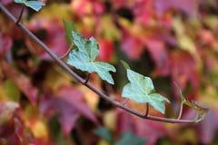 осень покрасила листья стоковая фотография