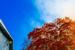 Осень Покрашенные дерево и крыша дома против голубого неба Стоковая Фотография