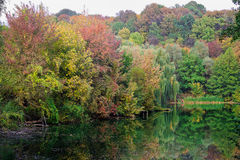 осень понизилась вода отражения листьев Стоковое Фото