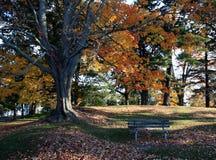 Осень Портсмута Стоковые Фото