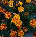 Осень природы цветков стоковые изображения