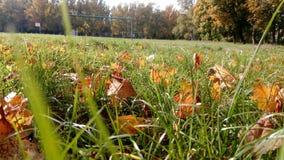 Осень природы Стоковое фото RF