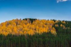 осень приходит имеет Стоковая Фотография RF