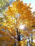 Осень приходя вверх стоковое изображение