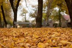 Осень прогулка Парк Стоковые Фото