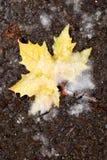 Осень против Зима Стоковая Фотография RF