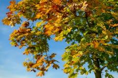 Осень против неба Стоковые Фото
