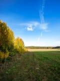 Осень пущи Стоковое Изображение