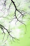 осень разветвляет вал Стоковые Фото