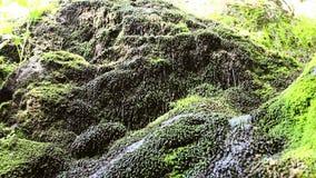 осень раньше сделала изображением гор горы приполюсный поток сток-видео