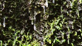 осень раньше сделала изображением гор горы приполюсный поток видеоматериал