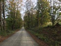 осень раньше стоковая фотография rf
