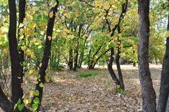 осень раньше Стоковое Фото