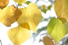 осень раньше Стоковое Изображение