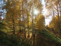 Осень русской березы золотая Стоковая Фотография