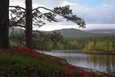 осень северная Стоковая Фотография