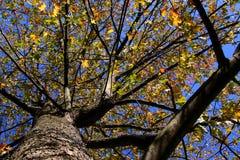 осень смотря вал вверх Стоковое Фото
