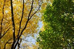 осень смотря вал вверх Стоковые Фото