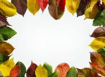 осень содержит путь листьев рамки архива Стоковые Фото