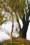 Осень сосны Стоковые Изображения