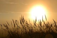 Осень Солнце Стоковая Фотография