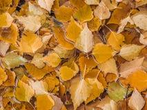 Осень Справочная информация Стоковые Фотографии RF