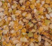 Осень Справочная информация Стоковое Изображение